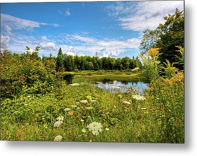 Metal Print featuring the photograph Queen Anne's Lace On The Moose River by David Patterson