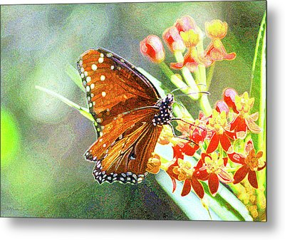 Queen Butterfly Metal Print by Inspirational Photo Creations Audrey Woods