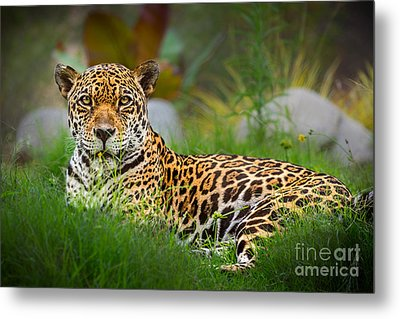 Queen Of The Jungle Metal Print by Jamie Pham