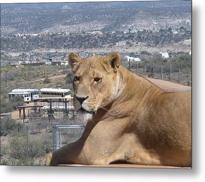 Metal Print featuring the photograph Queen Of The Mountain by Jeanette Oberholtzer
