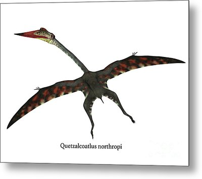 Quetzalcoatlus Flying Reptile With Font Metal Print by Corey Ford