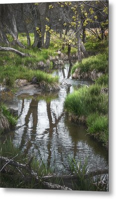 Quiet Stream Metal Print by Scott Norris