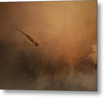 Quiet Time - Bird Of Prey Art Metal Print by Jordan Blackstone