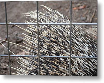 Quills Of An African Porcupine Metal Print by Linda Geiger