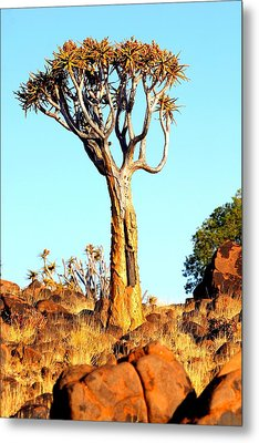 Metal Print featuring the photograph Quiver Tree by Riana Van Staden