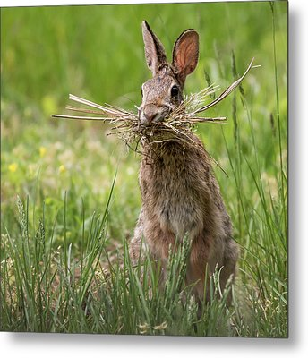 Rabbit Collector Square Metal Print by Terry DeLuco