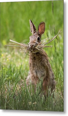 Rabbit Collector  Metal Print by Terry DeLuco