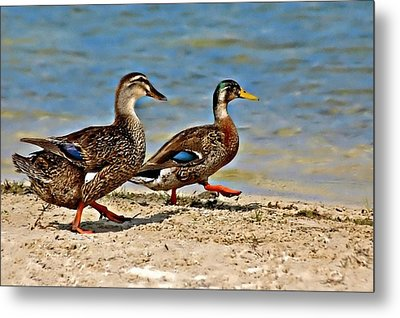 Race You To The Water Metal Print by Carolyn Marshall