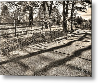 Metal Print featuring the photograph Radiance by Betsy Zimmerli