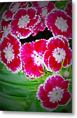 Metal Print featuring the photograph Radiant Red  by Debra     Vatalaro