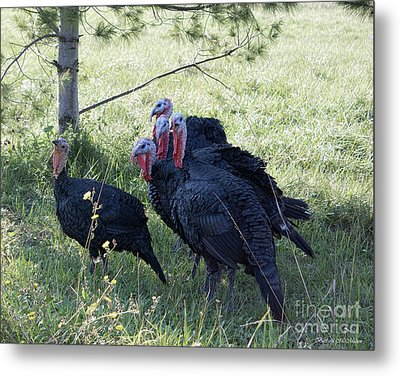 Rafter Of Wild Turkeys Metal Print by Barbara McMahon