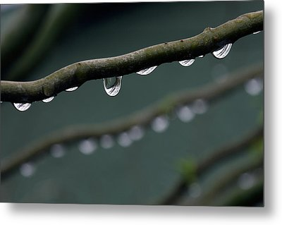 Rain Branch Metal Print by Photography by Gordana Adamovic Mladenovic