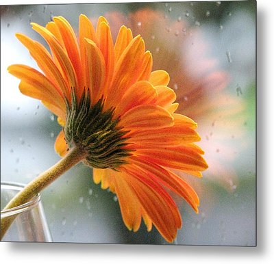 Rain Drops At My Window Metal Print by Angela Davies