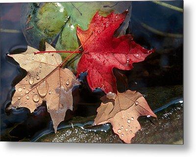 Rain Drops On Leaves Metal Print by Raju Alagawadi