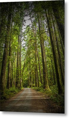 Rain Forest Dirt Road Metal Print by Randall Nyhof