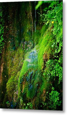 Rain Forest Metal Print by Louis Dallara