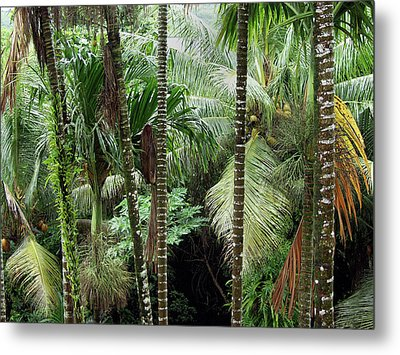 Rain Forest Palau Metal Print