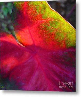 Rainbow Coleus 2 Metal Print by Jeff Breiman