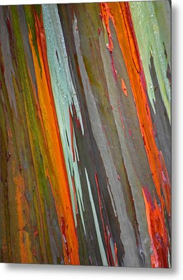 Rainbow Eucalyptus Tree Metal Print
