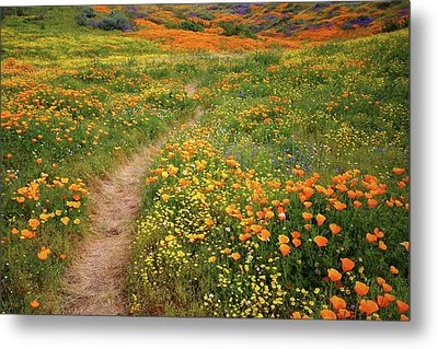 Metal Print featuring the photograph Rainbow Of Wildflowers Bloom Near Diamond Lake In California by Jetson Nguyen