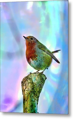 Metal Print featuring the photograph Rainbow Robin by Gouzel -