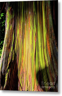 Rainbow Tree Metal Print by Jon Burch Photography