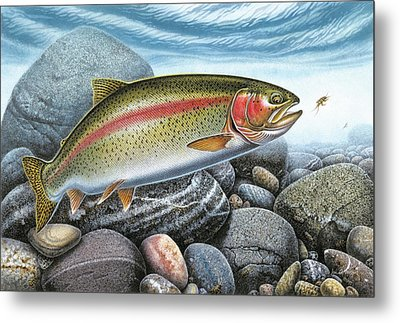 Rainbow Trout Stream Metal Print by JQ Licensing
