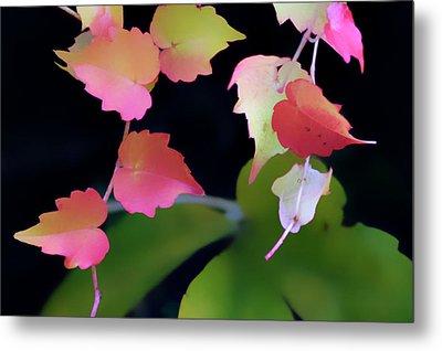 Rainbow Vine Leaves Metal Print