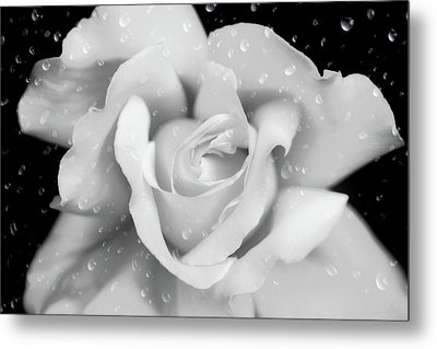 Metal Print featuring the photograph Raindrops On Rose Black And White by Jennie Marie Schell