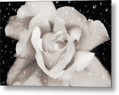 Metal Print featuring the photograph Raindrops On Sepia Rose Flower by Jennie Marie Schell