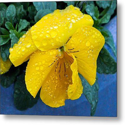 Metal Print featuring the photograph Raindrops On Yellow Pansy by E Faithe Lester