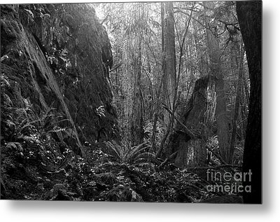 Metal Print featuring the photograph Rainforest Black And White by Sharon Talson