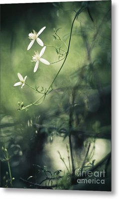Rainforest Dreaming Metal Print by David Lade
