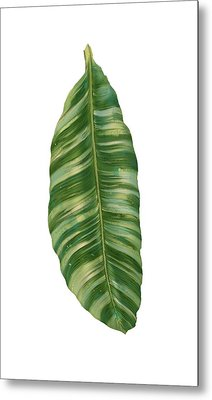 Rainforest Resort - Tropical Banana Leaf  Metal Print by Audrey Jeanne Roberts