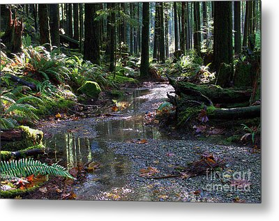Metal Print featuring the photograph Rainforest Trail 2 by Sharon Talson