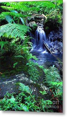 Rainforest Waterfall Metal Print by Thomas R Fletcher