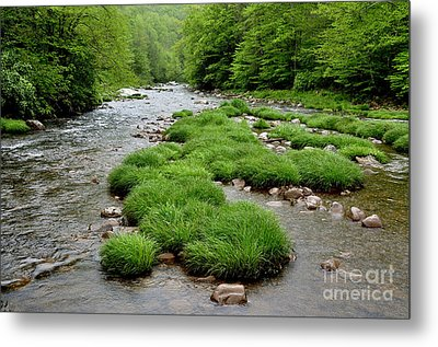 Rainy Day On Williams River  Metal Print by Thomas R Fletcher