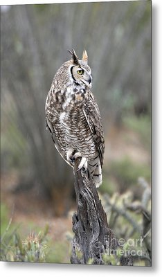 Rainy Day Owl Metal Print