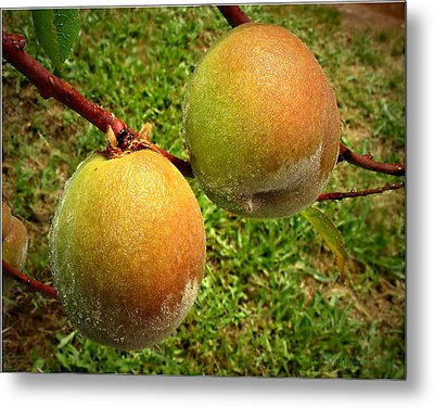 Rainy Day Peaches Metal Print by Joyce Dickens