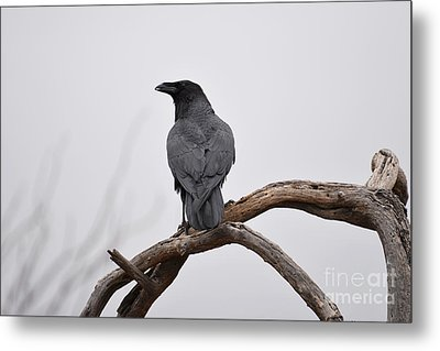 Rainy Day Raven Metal Print