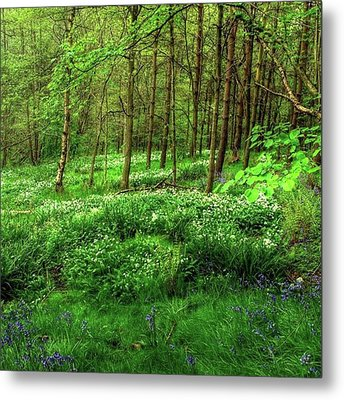 Ramsons And Bluebells, Bentley Woods Metal Print by John Edwards