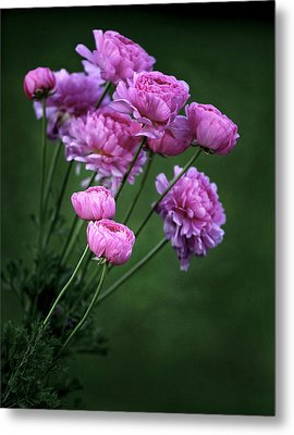 Ranunculus Metal Print by James Steele