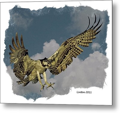 Raptor Metal Print by Larry Linton