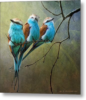 Raquet Tailed Rollers Metal Print by R christopher Vest