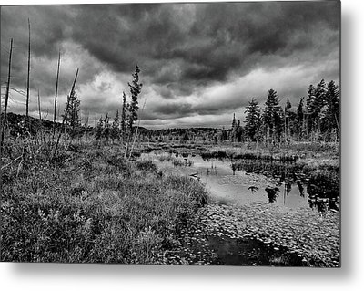 Metal Print featuring the photograph Raquette Lake Bog by David Patterson