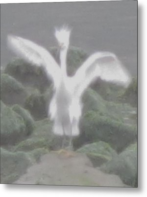 Metal Print featuring the photograph Rare Ghost Snowy Egret by John King