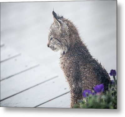 Profile In Kitten Metal Print