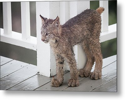 Laser Eyes Big Feet Metal Print
