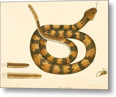Rattlesnake Metal Print