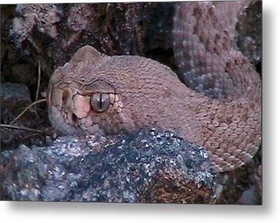 Rattlesnake Portrait Metal Print